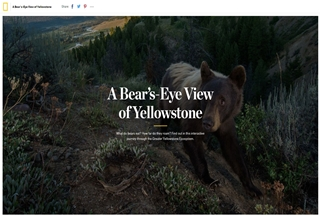 A Bear's Eye